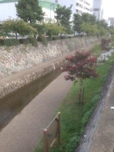 京都市内写真